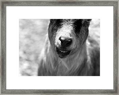Beardy Smiley Framed Print by Angela Rath