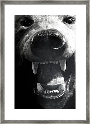 Beared Teeth Framed Print by Jez C Self