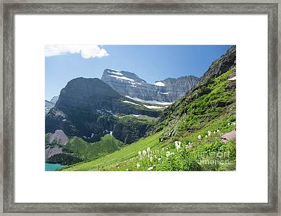 Beargrass - Grinnell Glacier Trail - Glacier National Park Framed Print