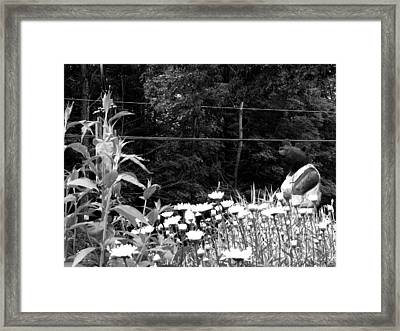 Bearness Framed Print by Dylan Kershaw