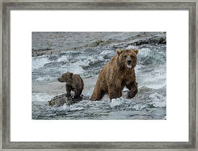 Framed Print featuring the photograph Bears Being Watchful  by Cheryl Strahl