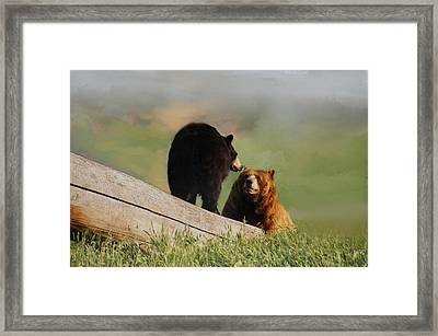Bears In Conversation Framed Print by Art Spectrum