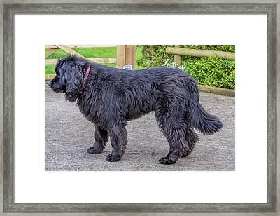 Beast Framed Print by Angela Aird