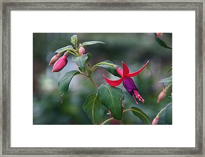Beat Up Beauty Framed Print by Byron Varvarigos