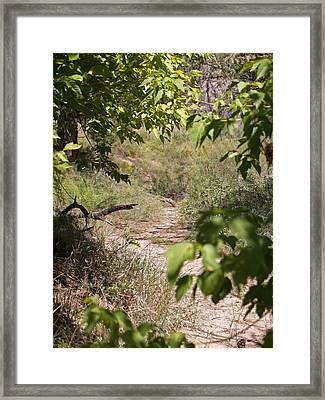 Beaten Path Framed Print by James Granberry