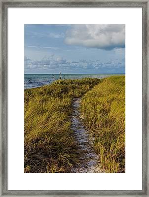 Beaten Path Framed Print