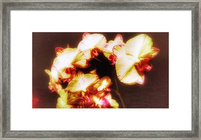 Framed Print featuring the photograph Beautiful Orchid by Isabella F Abbie Shores FRSA