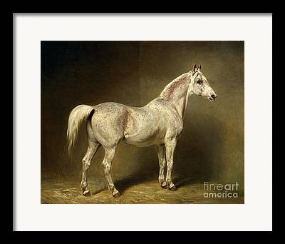 Der Araberschimmel Beatrice Framed Prints