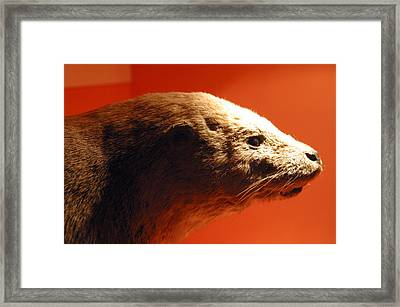 Beatter Framed Print by Jez C Self