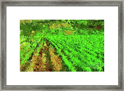 Beaujolais Vineyard Framed Print