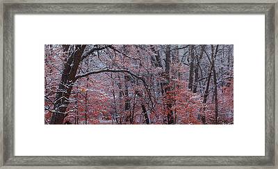 Beautful Change Framed Print