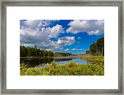 Beautiful Afternoon In The Pine Lands Framed Print by Louis Dallara