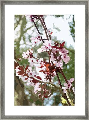 Beautiful Almond Blossoms Framed Print