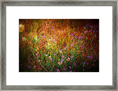 Beautiful And Wild Flowers Framed Print