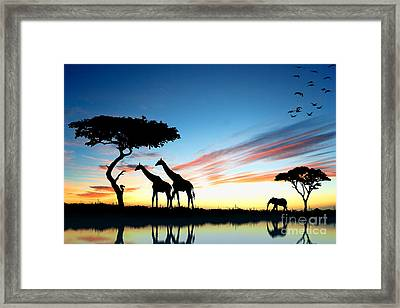 Beautiful  Animals In Safari Framed Print