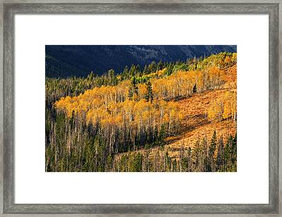Beautiful Autumn Aspen Trees Creating Sea Of Gold In Stanley Idaho Usa Framed Print by Vishwanath Bhat