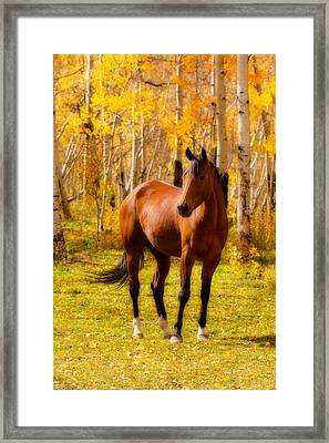 Beautiful Autumn Horse Framed Print by James BO  Insogna