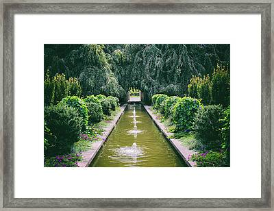 Beautiful Beech Trees Framed Print
