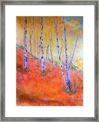 Beautiful Birches Framed Print