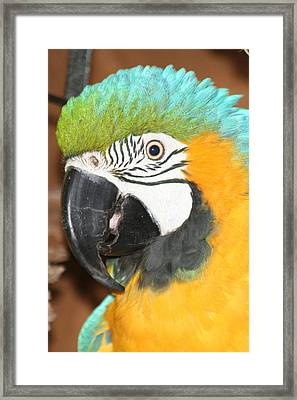 Framed Print featuring the photograph Beautiful Bird by Diane Merkle
