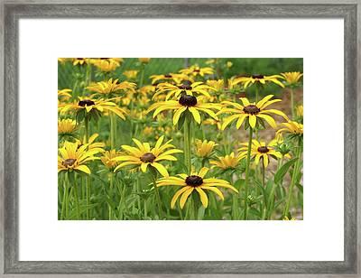 Beautiful Black Eyes Framed Print