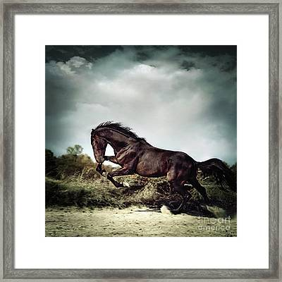 Beautiful Black Stallion Horse Running On The Stormy Sky Framed Print