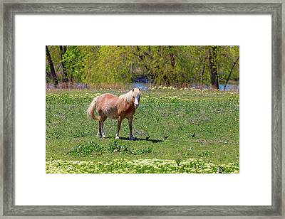 Beautiful Blond Horse And Four Little Birdies Framed Print by James BO Insogna