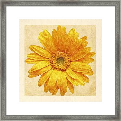 Beautiful Blossom Framed Print