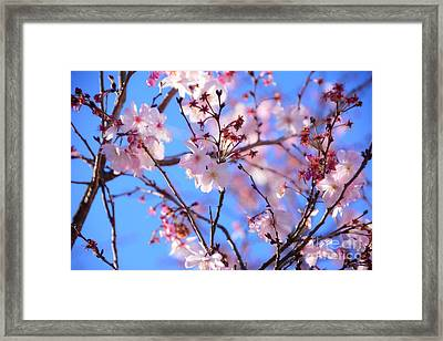 Beautiful Blossoms Blooming  For Spring In Georgia Framed Print