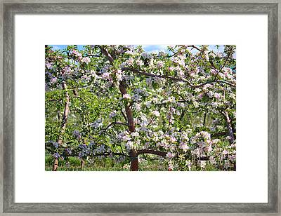 Beautiful Blossoms - Digital Art Framed Print by Carol Groenen
