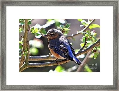 Beautiful Blue Framed Print by Marle Nopardi