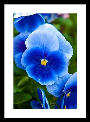 May Flower Framed Prints