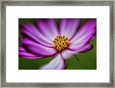 Beautiful Blur Framed Print by Scott Campbell