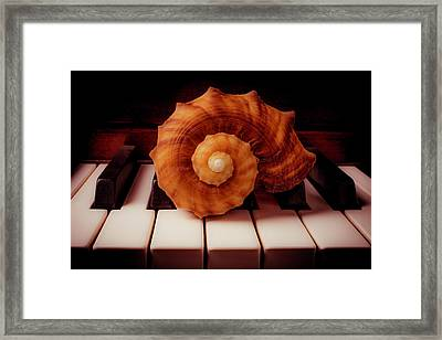 Beautiful Brown Shell Framed Print by Garry Gay