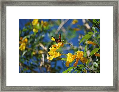 Beautiful Butterfly Framed Print by Donna Greene