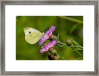 Beautiful Butterfly On Pink Thistle Framed Print