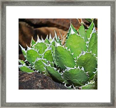 Beautiful Cactus Framed Print by Donna Greene
