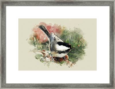Beautiful Chickadee - Watercolor Art Framed Print