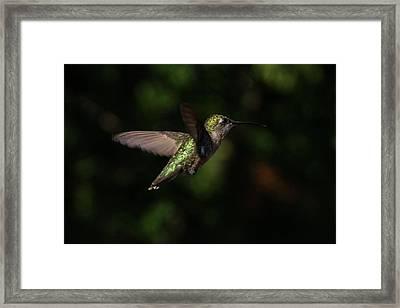 Beautiful Colors Framed Print