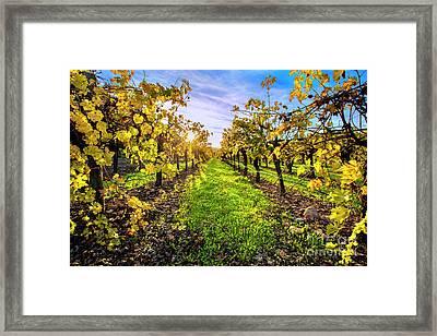 Beautiful Colors On The Vines Framed Print by Jon Neidert