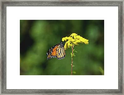 Beautiful Combination Framed Print
