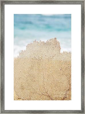 Beautiful Coral Element 2 Framed Print by Brandon Tabiolo - Printscapes