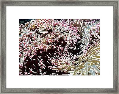 Beautiful Coral Reef  1 Framed Print by Lanjee Chee