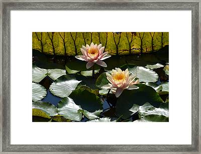 Beautiful Dainties Framed Print by Deborah  Crew-Johnson