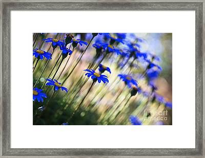 Beautiful Dancing Blue Flowers Romance Framed Print