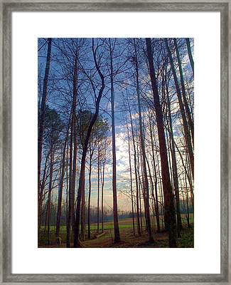 Beautiful Day Framed Print by Beverly Hammond