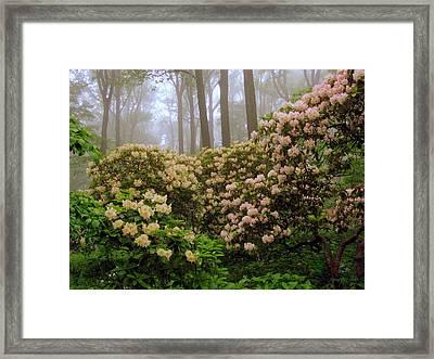 Beautiful Display Framed Print by Deborah  Crew-Johnson