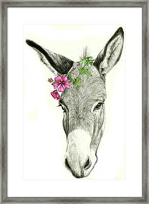 Beautiful Donkey Framed Print