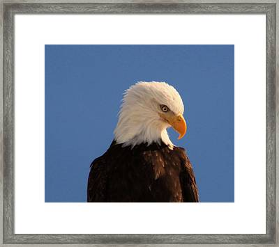 Framed Print featuring the photograph Beautiful Eagle by Jeff Swan