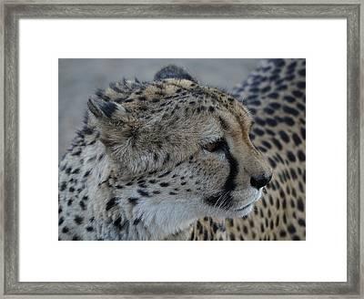 Beautiful Face Framed Print